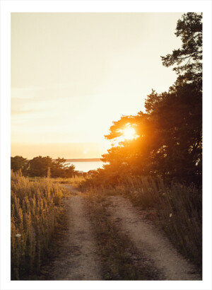 En skogsväg i solnedgången