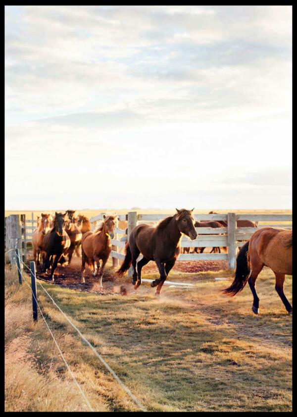 inramad bild på hästar som springer