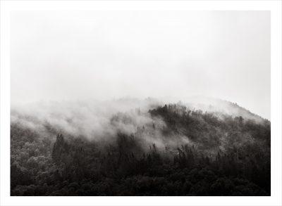 trädtoppar i dimma svartvit