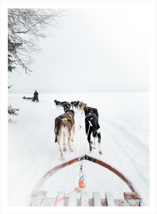 Hundar som springer framför en släde i fjäll och snö