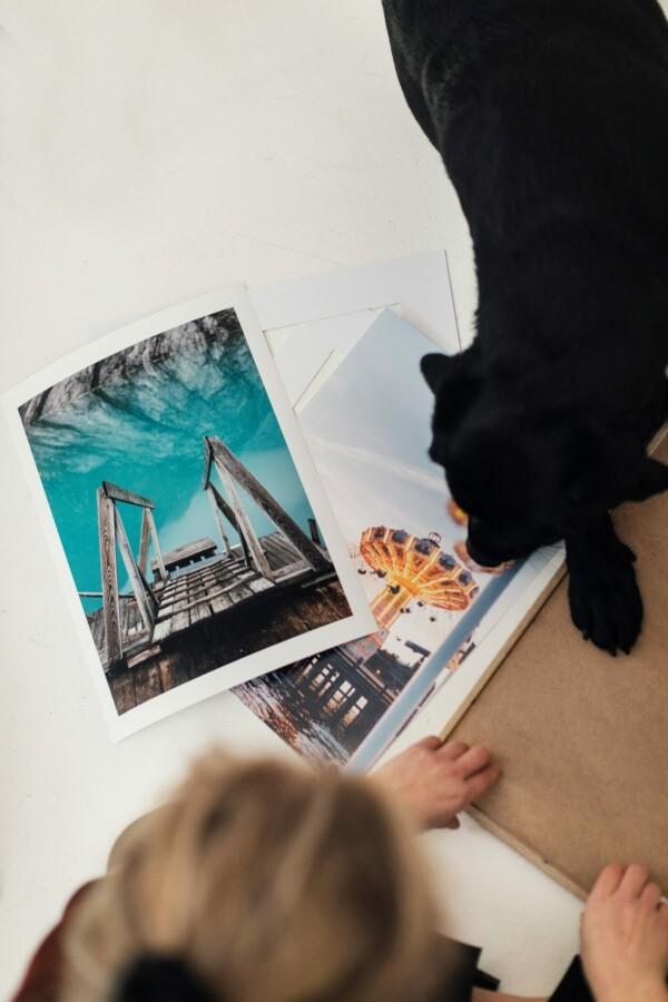 Posters på golv med svart hund bredvid