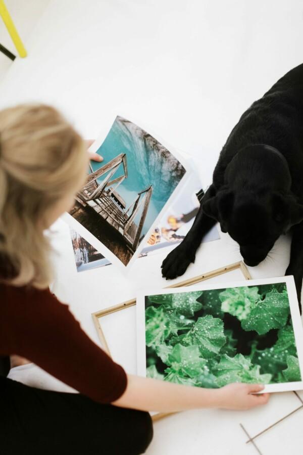 Posters på golv med människa och hund som sorterar