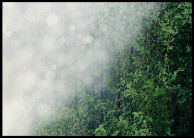 BiomeInramad med svart ram en poster av grönt fält med massor av solljus