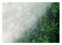 Ett grönt fält ovanifrån med starka solstrålar