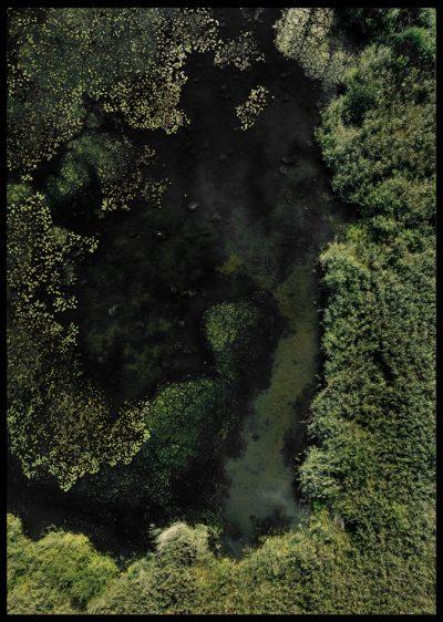 Inramad med svart ram en poster av näckrosor och vatten