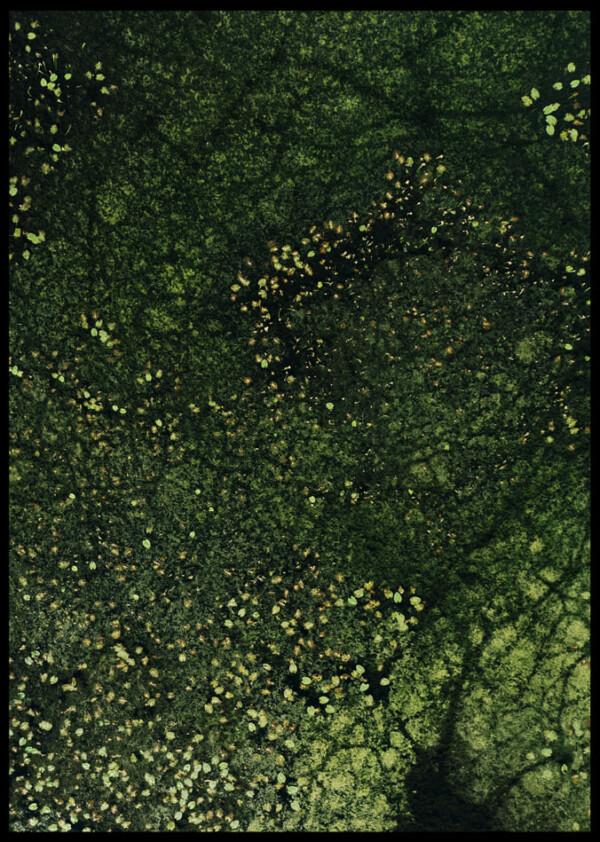 Inramad med svart ram en poster av näckrosor ovanifrån