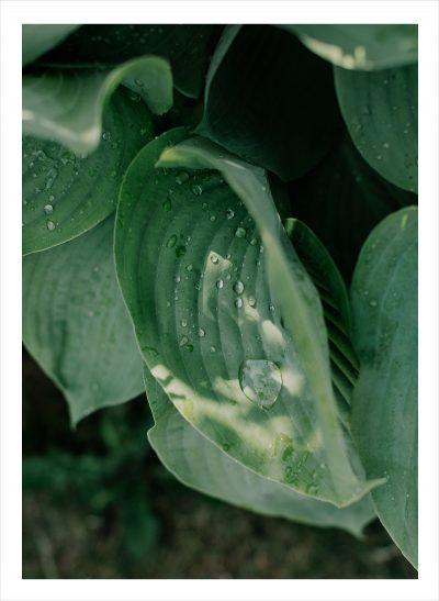 Grönt löv med regndroppar på