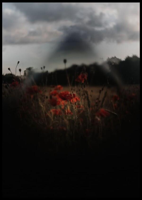 Inramad med svart ram en poster av vallmofält