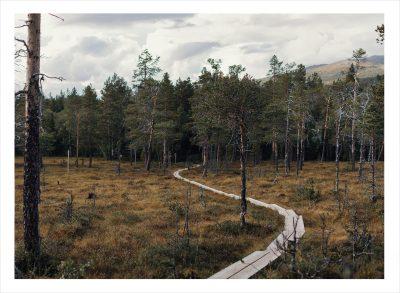 En slingrande stig över träskmark