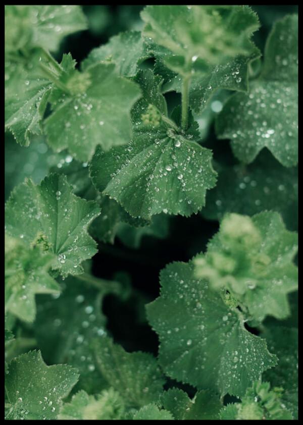 Inramad med svart ram en poster av löv med regndroppar på